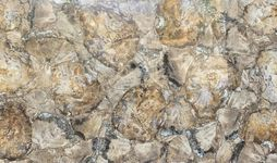 Petriefied Wood Polished-min.jpg