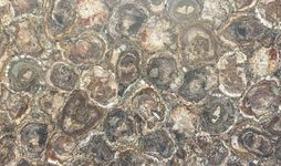 Petrified Wood Leather-min.jpg